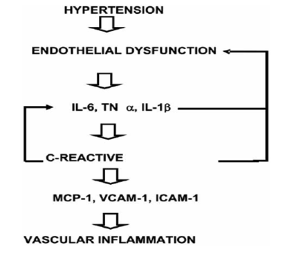 Interactions between inflammatory mediators and endothelial dysfunction associated with hypertensio