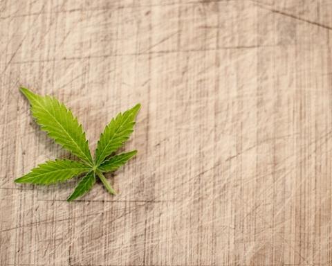 Marijuana and Its Consequences into the Teenage Brain